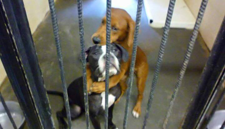 El 'abrazo' entre dos perros amigos los salva de morir